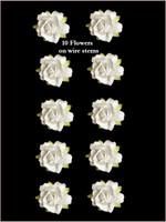 45210 Rose White