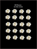 40210 Baby Blossoms White
