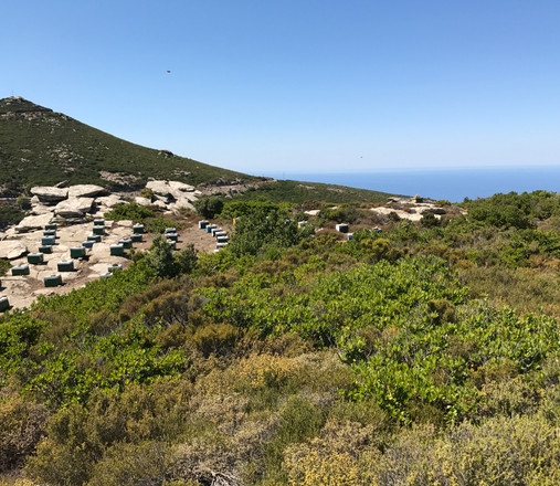 Notes from Ikaria