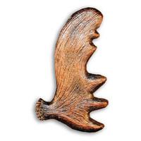 Moose Antler Cabinet Hardware Knob - Left Facing