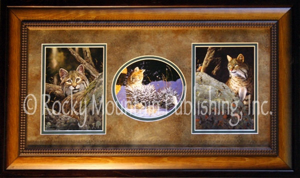 Framed Wildlife Art Tom Mansanarez Bobcat Triple Set