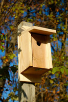 Eastern Bluebird Joy Box in Solid Cypress.