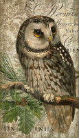 Vintage Owl Sign