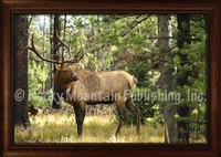 Double Check Framed Elk Wildlife Print - Mitchell Mansanarez Framed Giclee