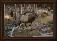 Maneuvering the Pines - Elk Wildlife Art - Hayden Lambson Giclee