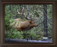 First Look Framed Elk Wildlife Print - Mitchell Mansanarez