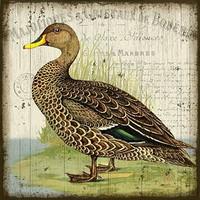 Duck II Sign