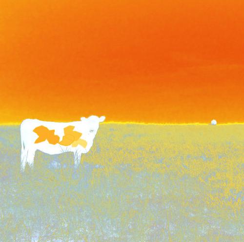 Jan Neil | I Love Cows (Orange)