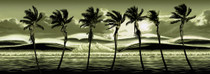 Fantasy Palms [Limited Edition]
