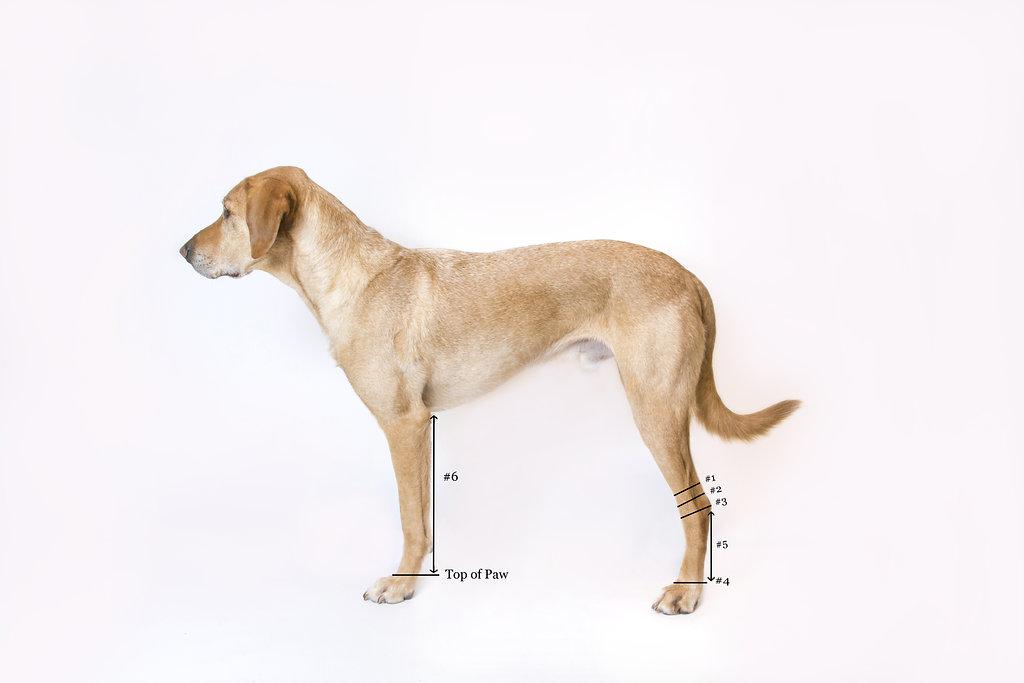 dog pressure sores treatment osteoarthritis solutions hock sock. Black Bedroom Furniture Sets. Home Design Ideas