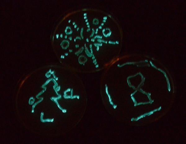 Plasmid pJE202/pVIB to Create Bioluminescent Bacteria