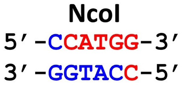 Restriction Enzyme NcoI 10uL