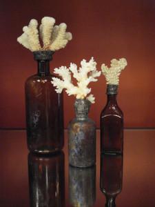 Vintage Coral Bottles set of 3 in Amber