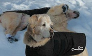 Oilskin Dog Coat Luxurious Sherpa Lining . Whippets, Greyhounds and Large sizes also available.