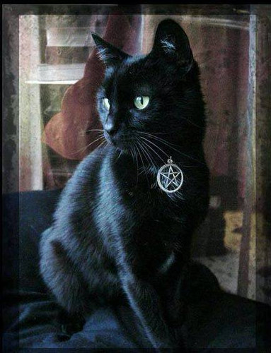 Witches Familiar Pentacle Cat Collar