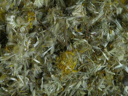 Arinca Flower ~ Herbal Alchemy