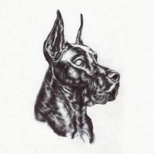Great Dane - Alpha Dog - LP Vinyl