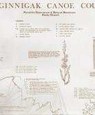 Sasaginnigak Canoe Country Historical Map