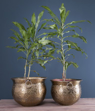 Set Of 2pcs Pot Planters In Brass (PL1238)