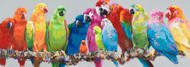 Painting - Colourful Parrots On A Branch (C1524CC)