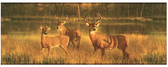 CH7862BDLM-LAKE FOREST LODGE WHITE TAIL LAKE BORDER-GOLDEN