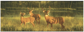 CH7863BDLM-LAKE FOREST LODGE WHITE TAIL LAKE BORDER-GREEN