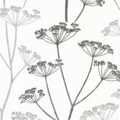 Albury Brasilia Flower Charcoal-Pewter Wallpaper 2532-20427