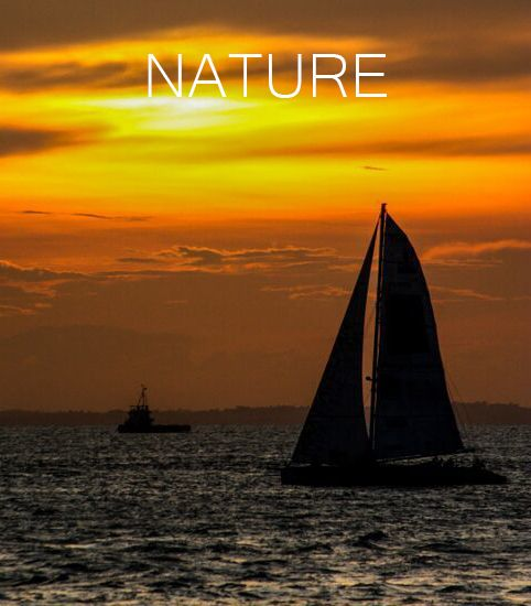 Nature Photography Banner