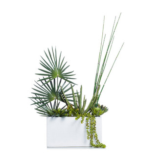 White Succulent Planter with Fan Palm & Horsetail