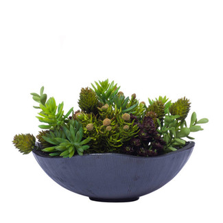 Mini Succulents in Black Wavy Bowl