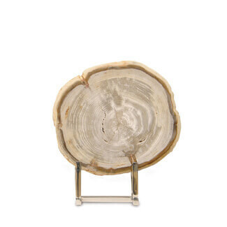Sliced Petrified Wood on Stand
