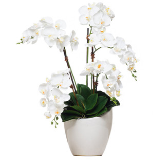 White Orchid in Slanted Pot