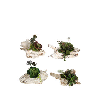 Faux Succulents on White Wood Bases - Set of 4