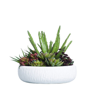 Succulents in Textured White Container