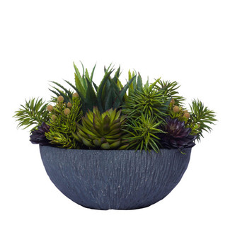 Mixed Succulents in Textured Black Bowl