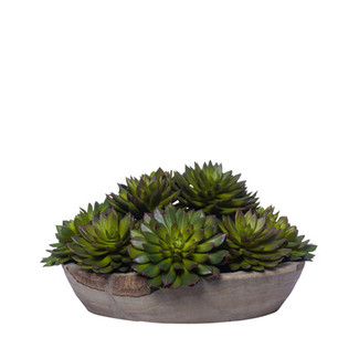 Mixed Echeveria In Large Wood Bowl