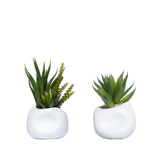 Succulents In White Dented Pots - Set of 2