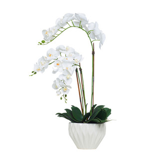 White Orchid in White Bowl
