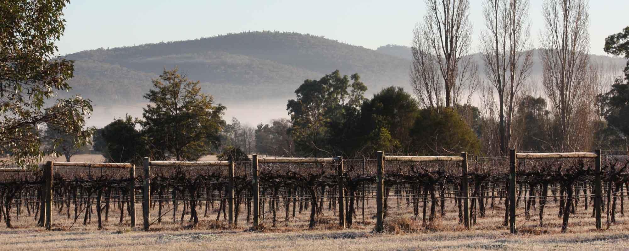 vineyard view frosty