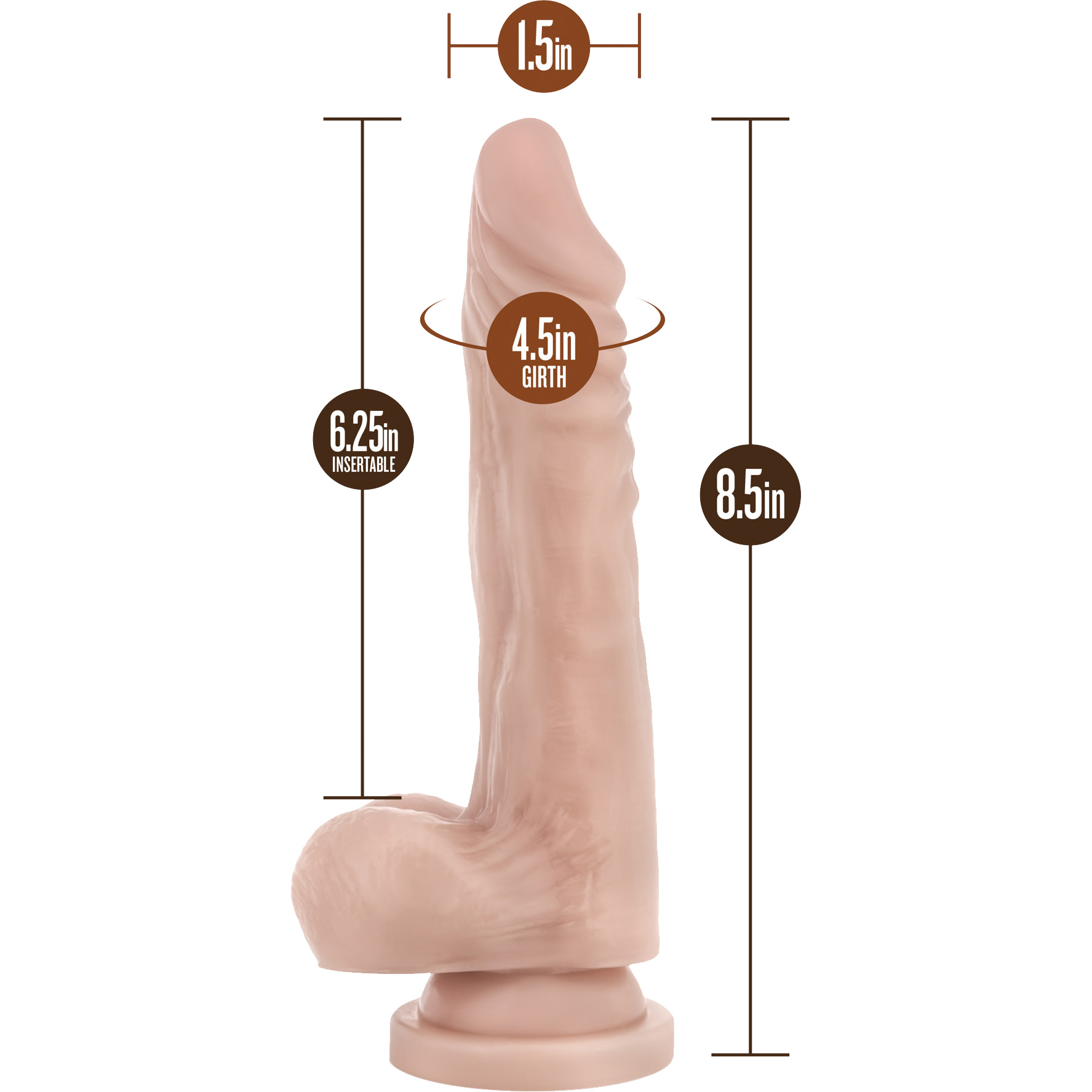 Dr. Skin Stud Muffin Realistic Dildo With Suction Cup by Blush - Measurements