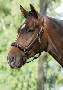 Mountain Horse Leather Halter Havana
