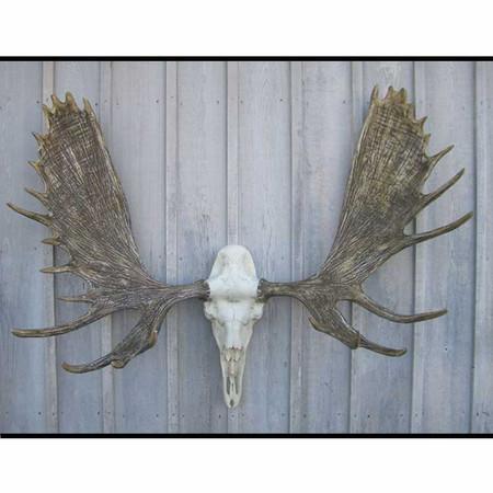 CHMSET Alaskan Moose European Mount