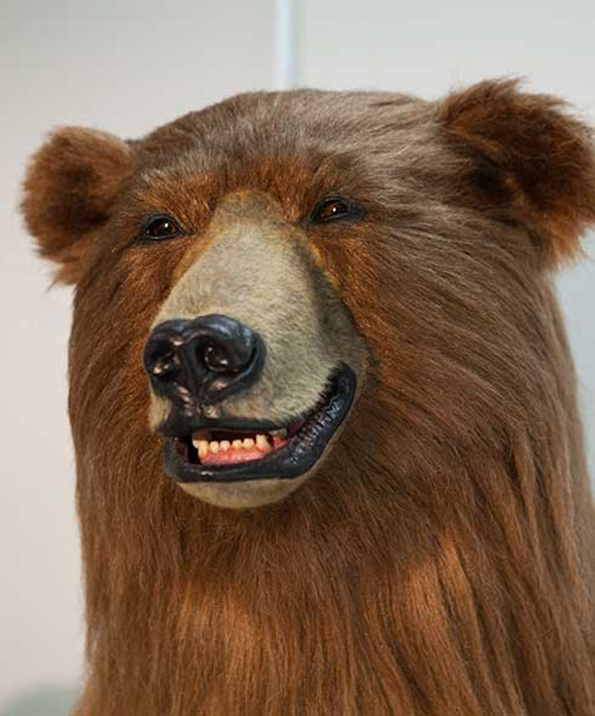 Rent Papa Bear Hollywood S Best Realistic Grizzly Bear