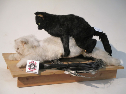 Realistic Life Sized Animated Cats Having Sex Puppets