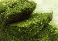 Ameristand 403T Plus Alfalfa