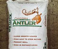 Antler Chicory