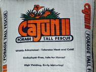 Cajun II Forage Tall Fescue