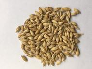 UC 933 Barley