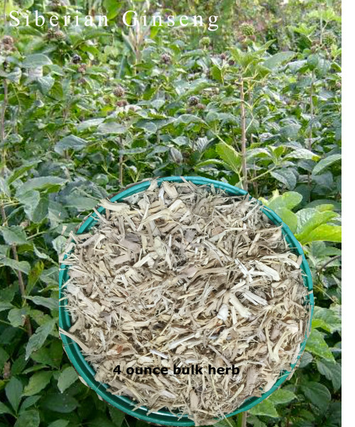 Ginseng Siberian (Eleuthero)  Powder