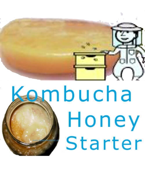 Kombucha Mushroom Culture Honey Starter